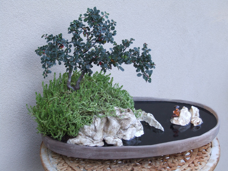 I miei vasi bonsai club amici del verde for Bonsai vasi
